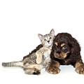 Very Sweet Kitten Lying On Puppy by StockImage