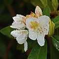 Very Wet Flower by Deborah Bowie
