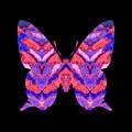 Vibrant Butterfly  by Rachel Hannah