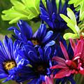 Vibrant Chrysanthemums by Debbie Oppermann