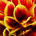 Vibrant Dahlia Petals by Kaye Menner