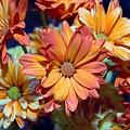 Vibrant Daisies by Joyce Baldassarre