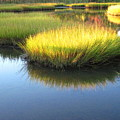 Vibrant Marsh Grasses by Sybil Staples