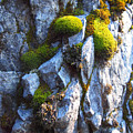 Vibrant Moss by Leah Vi