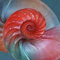 Vibrant Nautilus Pair - Horizontal by Gill Billington