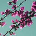 Vibrant Pink Flowers Bloom Floral Background by Srdjan Kirtic