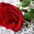 Victorian Rose by Kristin Elmquist