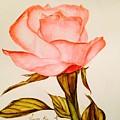 Victorian Rose  by Vinaya Kini