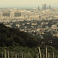 Vienna From The Vineyard by Ian  MacDonald