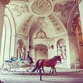 Vienna Turist Coach by Ariadna De Raadt