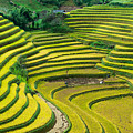 Vietnam Rice Terraces by Dong Bui