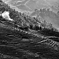 Vietnam Rice Terrain by Chuck Kuhn