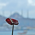 View From Istanbul Modern by Arvind Garg