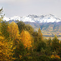 View From My Studio October 2008 by Dianne Roberson