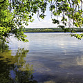 View From Under At Lake Carmi by Deborah Benoit