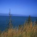 View Of Kachemak Bay, Alaska by Stacy Gold