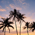 View Of Palms by Greg Vaughn - Printscapes