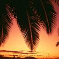 View Of Tahiti by Dana Edmunds - Printscapes