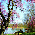 View Of The Lake In Spring by Susan Savad