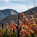 View On The Way Up Mt. Jo, Adirondacks by Sandy Roe