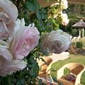 Villa Roses by Nadine Rippelmeyer