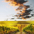 Vineard Aglow by Sharon Foster