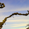 Vineland Series IIi by John Bartosik