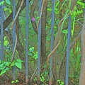 Vines Abstract IIi by Linda Brody