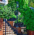 Vines Over Gate by Donna Bentley