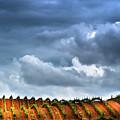 Vineyard 01 by Edgar Laureano