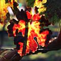 Vineyard 26 by Xueling Zou