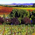 Vineyard 5 by Xueling Zou