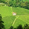 Vineyard Home by Scott Kemper