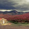 Vineyard House by Joao Almeida