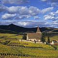 Vineyard In Alsace, France by Jean-Louis Klein & Marie-Luce Hubert