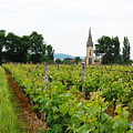 Vineyard In France by Marion McCristall