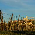 Vineyard In St. Martino by Wolfgang Stocker
