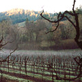 Vineyard In The Winter by PJ  Cloud