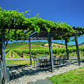 Vineyard by Jade Woods