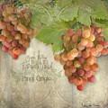 Vineyard - Napa Valley Vintner's Touch Pinot Grigio Grapes  by Audrey Jeanne Roberts