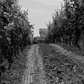 vineyard of old BW by Photographic Arts And Design Studio