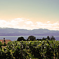 Vineyard On Lake Geneva by Jeff Barrett