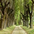 Vineyard Pathway by John Magyar Photography