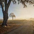 Vineyard Road by Joseph Smith