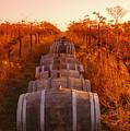 Vineyard Rows by Owen Ashurst