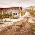 Vineyard Store House by Wendy Elliott