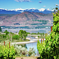 Vineyard View by Gene Wick
