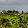 Vineyard View by Jean Haynes