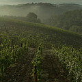 Vineyards Along The Chianti Hillside by Todd Gipstein