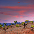 Vineyards At Sunset In Spain by Guido Montanes Castillo